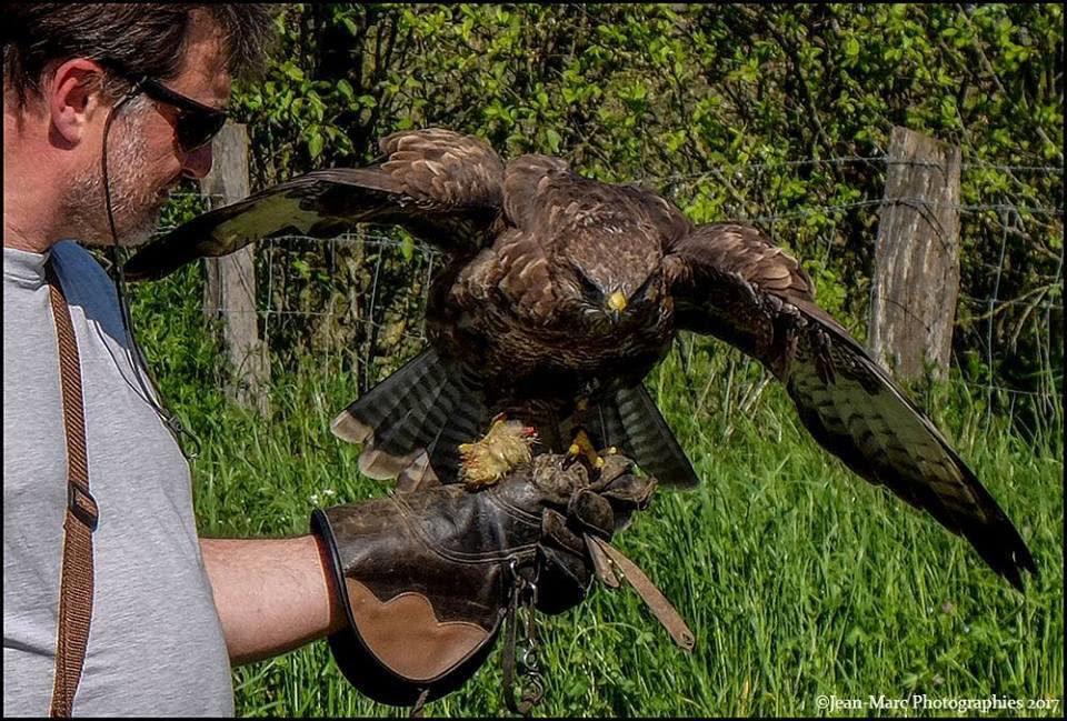 fauconnier lorraine